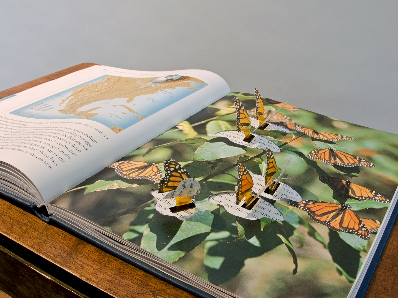 Picture Credit: Butterfly Book (2007). Andrea Roe in collaboration with Richard Brown. Photographed by Michael Wolchover.